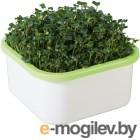 Здоровья КЛАД для микрозелени