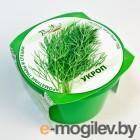 умные растения BontiLand Зелень круглый год Укроп 411814