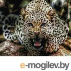 Набор алмазной вышивки Picasso Оскал леопарда (PD4050038)
