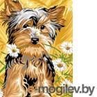 Картина по номерам Picasso Йорк и ромашки (PC3040029)
