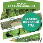 BontiLand Зелень круглый год 412293 Душица, Шалфей, Мелисса