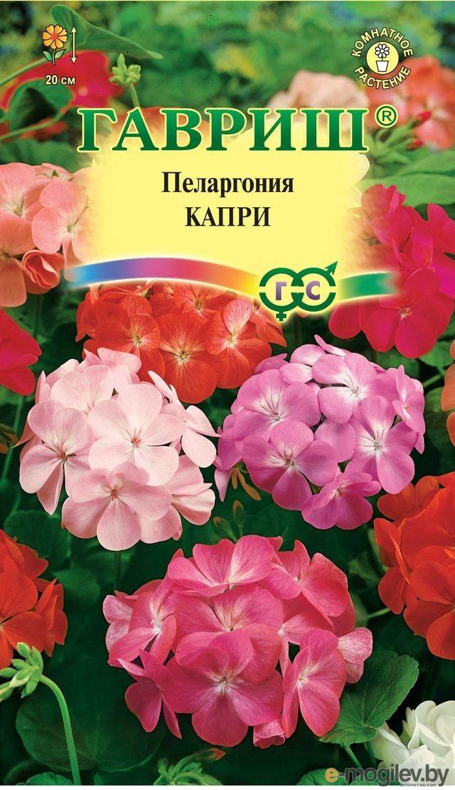 Пеларгония Капри F2 зональная* 4 шт