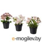 Искусственные растения Ikea Фейка 603.953.34 (3шт)