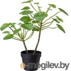 Искусственное растение Ikea Фейка 503.953.01