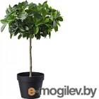 Искусственное растение Ikea Фейка 903.952.95