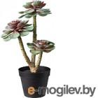 Искусственное растение Ikea Фейка 603.953.29