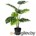 фейка, искусственное растение в горшке, д/дома/улицы монстера, 19 см 303.953.16