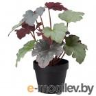 фейка, искусственное растение в горшке, д/дома/улицы пятнистая герань, 12 см 303.953.02