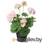 фейка, искусственное растение в горшке, д/дома/улицы, герань розовый, 12 см 703.953.24