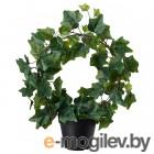 фейка, искусственное растение в горшке, д/дома/улицы, плющ дуга, 12 см 003.953.27