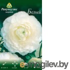 Семена цветов АПД Ранункулюс белый махровый / A30662 (10шт)