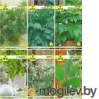 Семена цветов АПД Зеленый дом / A203651