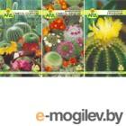 Семена цветов АПД Колючий дом / A203671