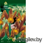 Семена цветов АПД Ирис голландский Броунз Квин / A30257 (10шт)