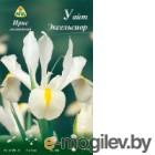 Семена цветов АПД Ирис голландский Уайт Эксельсиор / A30262 (10шт)