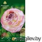 Семена цветов АПД Ранункулюс бело-розовый махровый / A30666 (10шт)