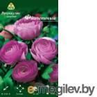 Семена цветов АПД Ранункулюс фиолетовый махровый / A30668 (10шт)