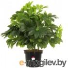 Искусственное растение GrenTrade Шефлера Веерон Dos / 12146