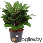 Искусственное растение GrenTrade Диффенбахия Маракай / 130220